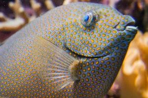 orange spots on fish