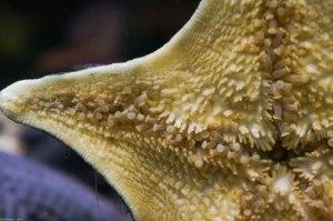 underbelly of a sea star